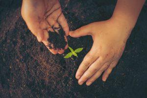 home grow cannabis