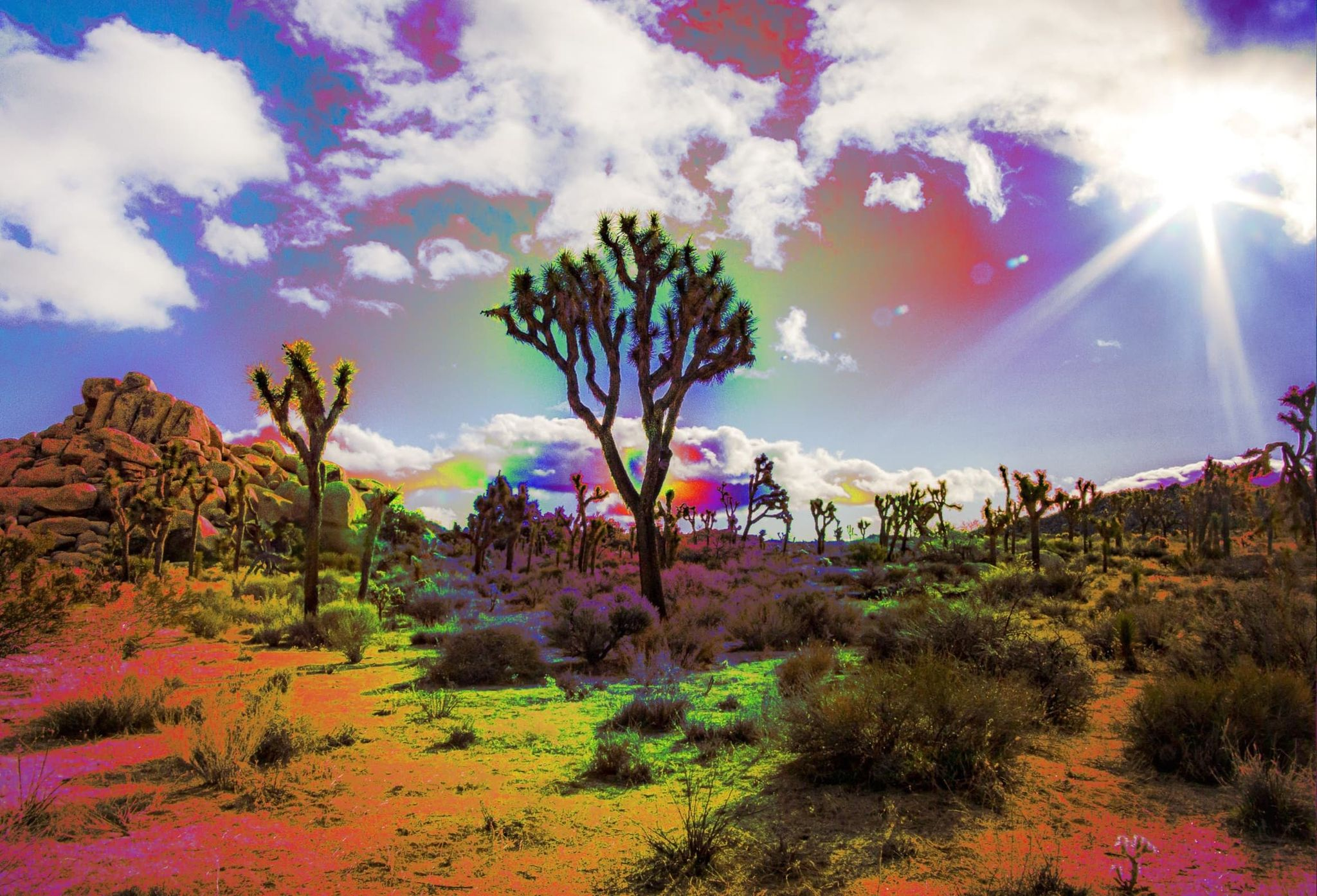Desert Tripping-- A Closer Look at Peyote: Spiritual, Medicinal, & Controversial 3