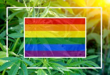 lgbtq cannabis