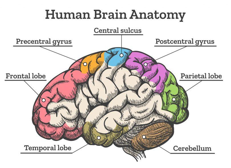 cannabis teens brain