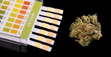 hhc drug test
