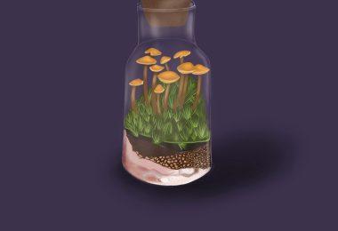 magic mushroom therapy