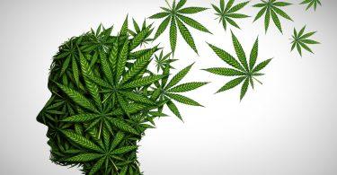 psychology cannabis