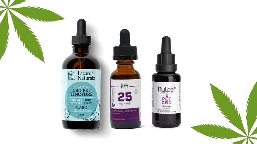best cbd for cats with cancer