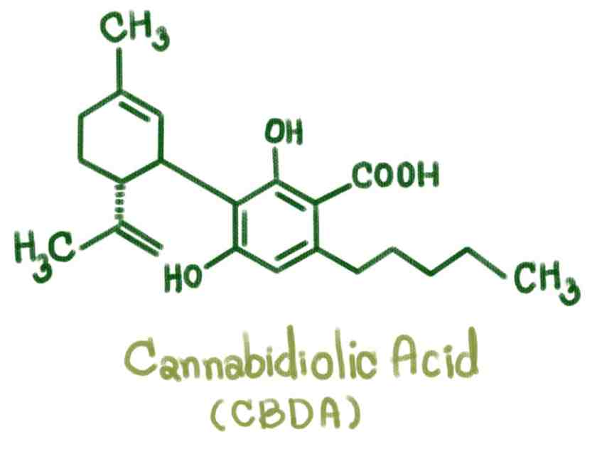 Best cbda oil