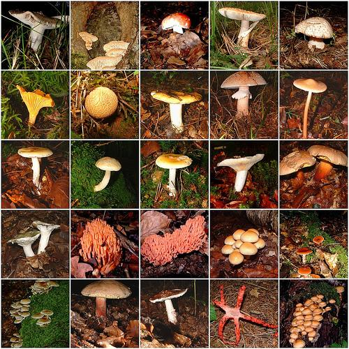 Mosaic of Mushroom Diversity (Used with permission.)
