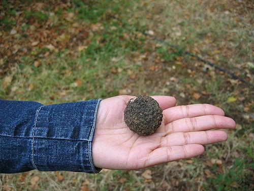 Truffle (Used with permission.)