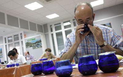 Catador de aceite: escuelas, formación y trabajo.