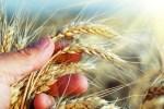 Agricultura de secano: ventajas y principales cultivos