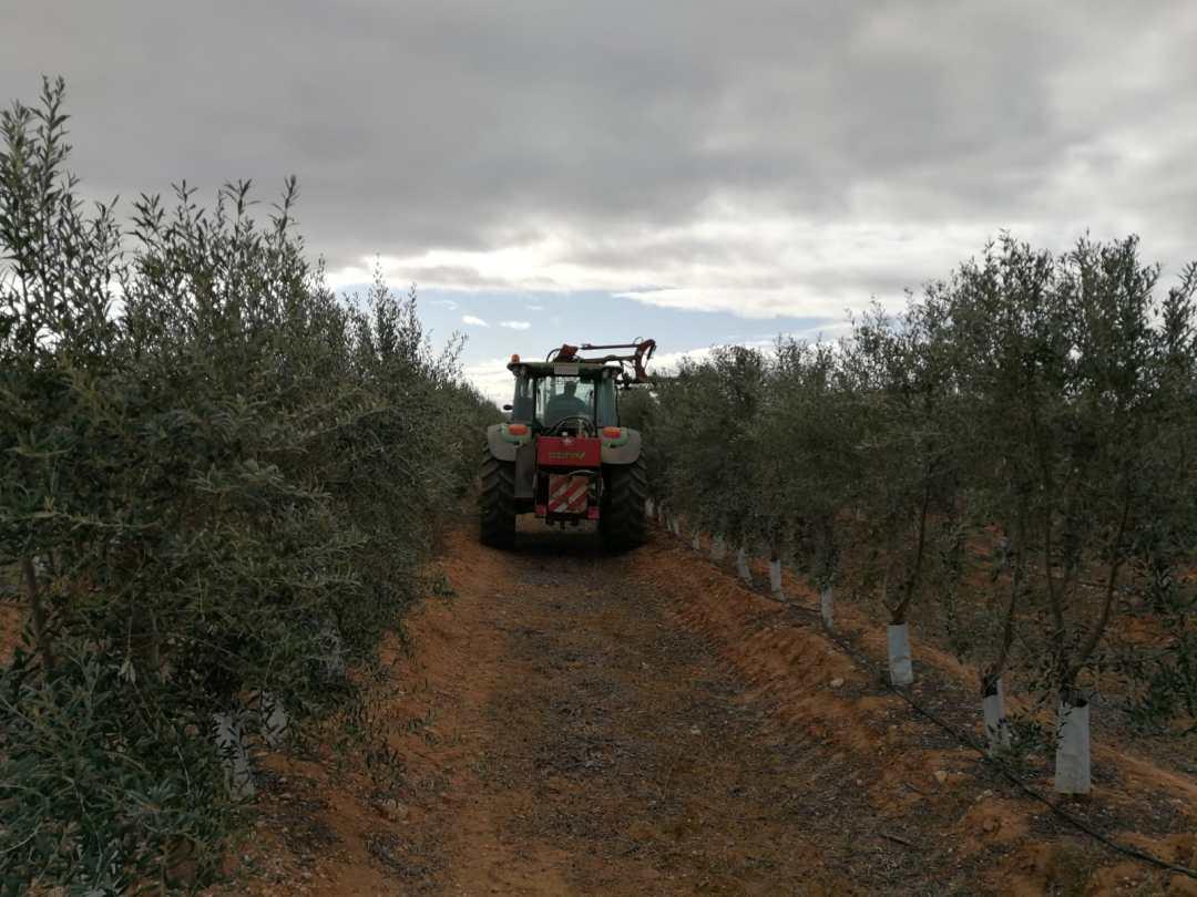 Poda del olivo topping