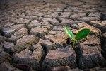 Consecuencias de la sequía en la agricultura