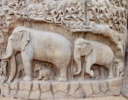 An elephant herd—visible, but intangible majesty