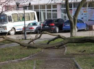 дерево під туристом