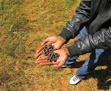 Mbuni Beans