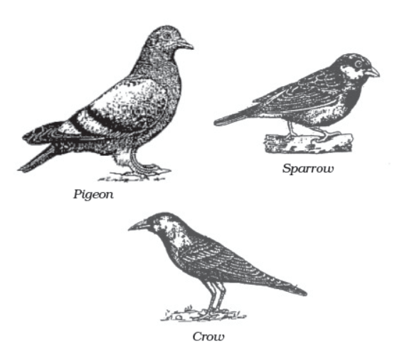 classification in animals