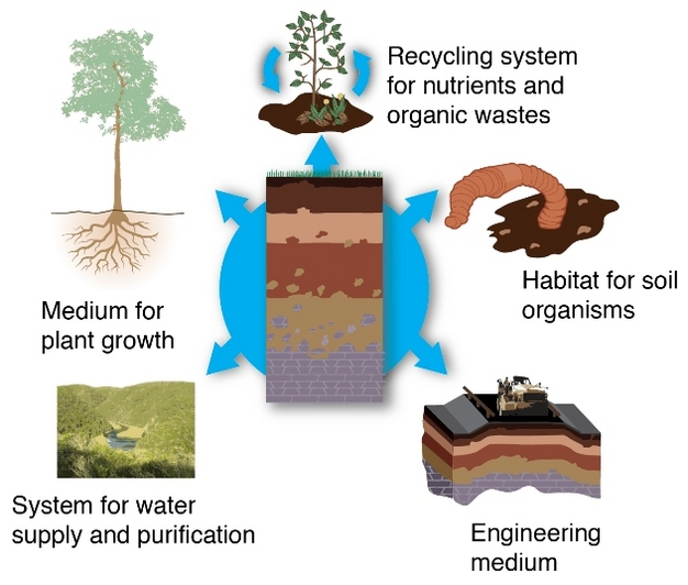 Factors Responsible for the Soil Formation