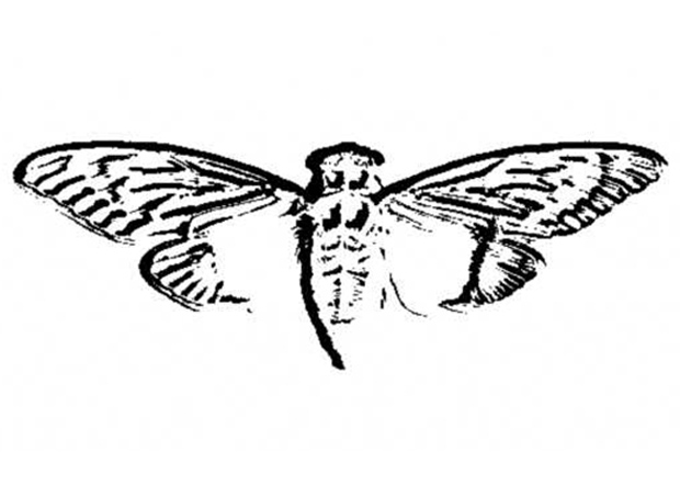 Cicada 3301: Code-breaking scavenger hunt has the Internet