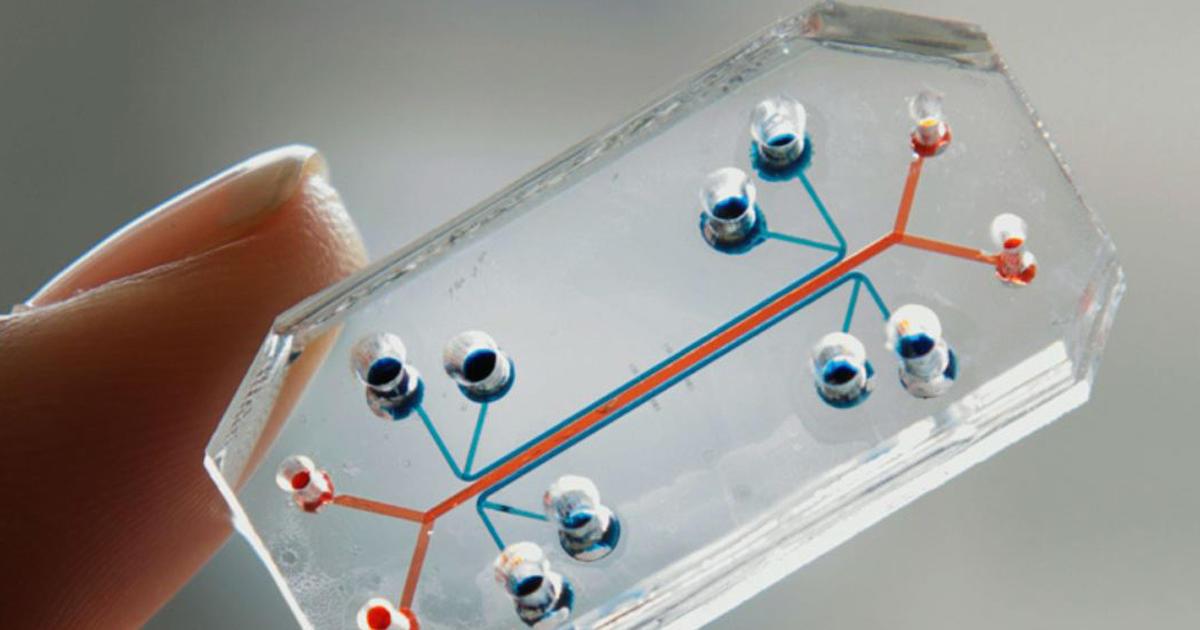 Lung on a chip tech set to revolutionize scientific drug