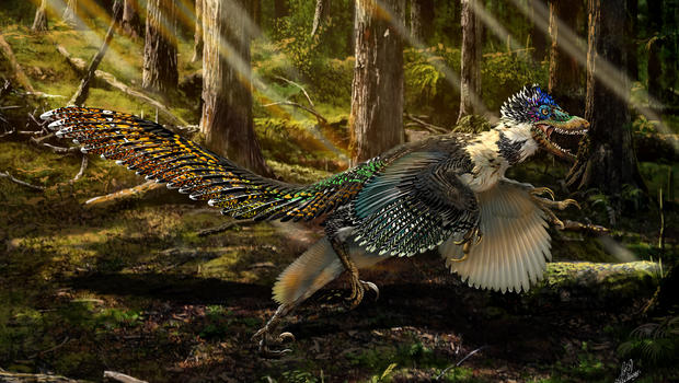 Image result for pictures of dinosaurs covered in peacock feathers