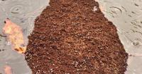 Fire Ant Carpet Tiles - Carpet Vidalondon