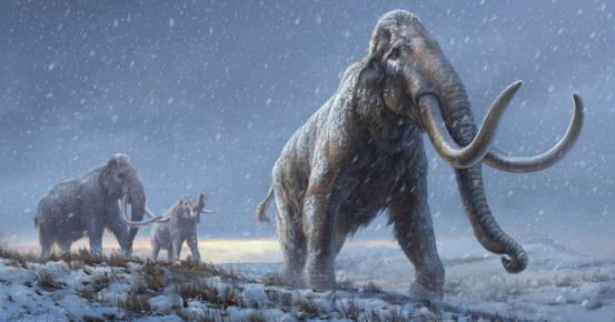 Researchers are finding the oldest DNA ever found – from a mammoth more than a million years old