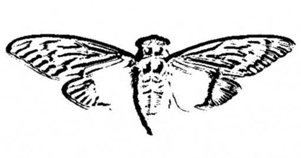 Cicada 3301: Code-breaking scavenger hunt has the Internet