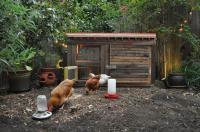 Seth and Elenas San Francisco micro-garden - 7 elaborate ...