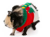 Pets in sweaters - Pets in sweaters - Pictures - CBS News