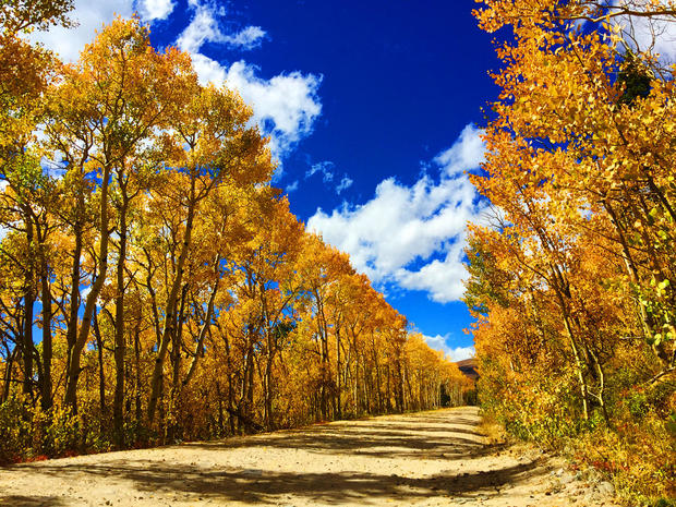 Fall Leaves Live Wallpaper Iphone Colorado Fall Foliage 2016 Pictures Cbs News