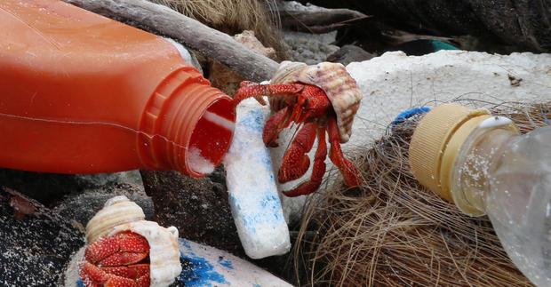 cocos-is-hermit-crabs-on-plastic-debris-credit-silke-stuckenbrock-crop.jpg
