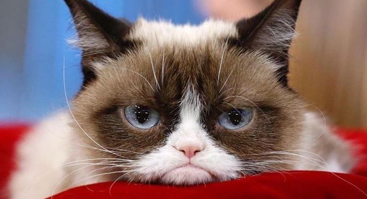 Muere Grumpy Cat, la gatita más famosa de Internet