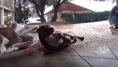 Perrito recibe caricias por primera vez y su reacción se vuelve viral