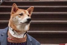 Los matices de la palabra perro