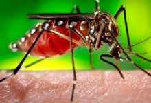 Incrementa 200% casos de dengue desde el 2018: Diana Carpios