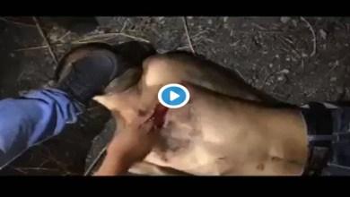 VIDEO (+18): Supuestos sicarios de La Familia Michoacana degüellan vivo a presunto sicario del CJNG