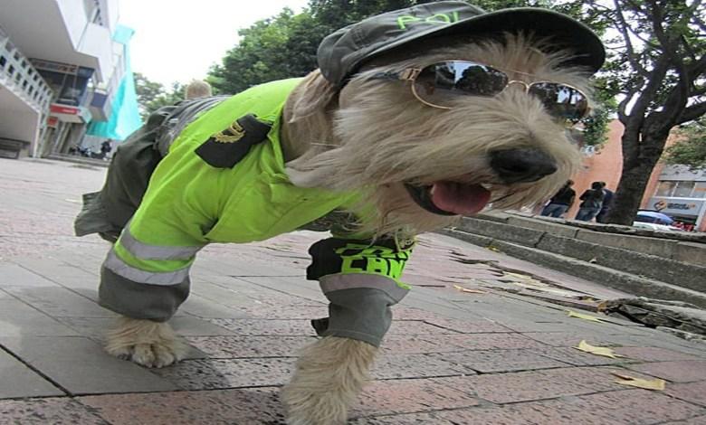 Perritos callejeros de Morelia podrían ser entrenados para ser policías