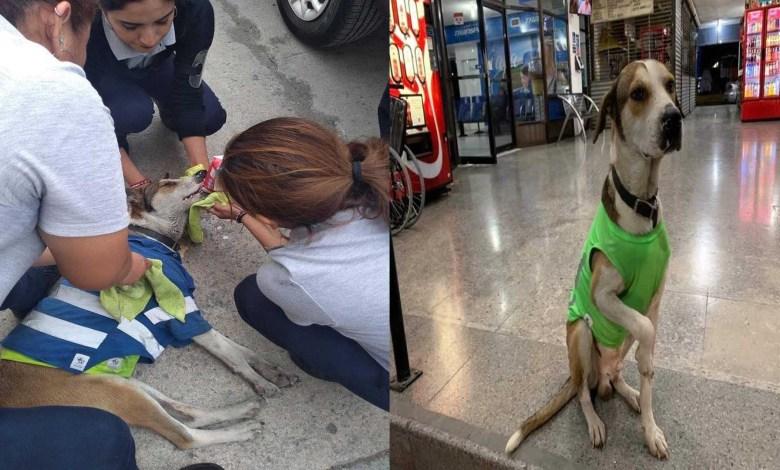 Envenenan a perrito que trabajaba en la terminal de autobuses