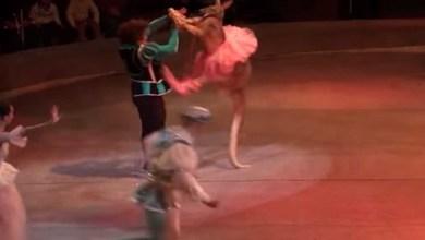 Photo of Video: Captan maltrato hacia un cangurito en circo; lo arrastran de la cola