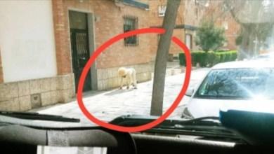 Photo of Harto de la cuarentena, hombre se disfraza de perro para salir a la calle y no ser multado