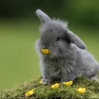 Spécial Pâques: les lapins les plus mignons du moooooonde!