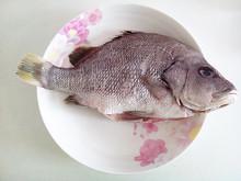 【海南石斑魚】_海南石斑魚廠家_海南石斑魚批發市場 - 阿里巴巴
