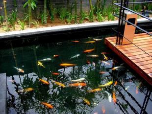 魚池過濾系統圖片 - 海量高清魚池過濾系統圖片大全 - 阿里巴巴