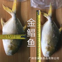 海水魚金鯧魚-海水魚金鯧魚批發、促銷價格、產地貨源 - 阿里巴巴