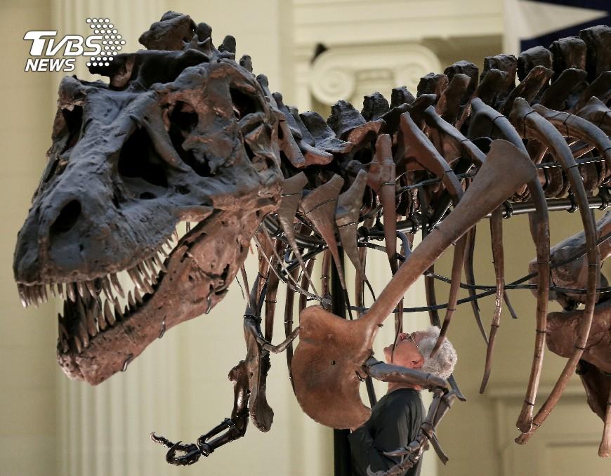 化石會說話! 研究發現暴龍身上有鱗片│TVBS新聞網