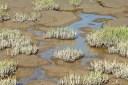 So Bay Salt Ponds