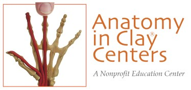 Anatomy in Clay Centers
