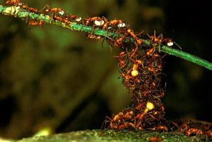 Ant Swarm 2
