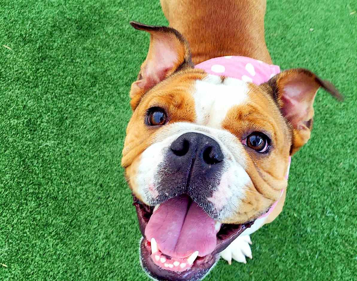 dog at dog boarding in Manheim, PA