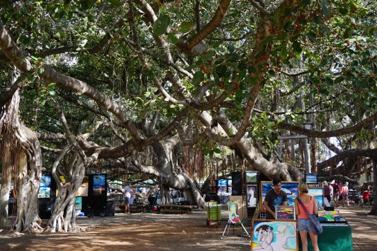 Banyan Tree - Lahaina