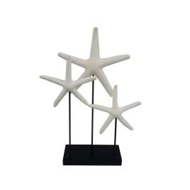 Sand Stone Star Fish (S)